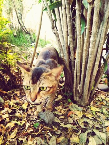 One Animal Tree Cat Walking Cat♡ Meawww Outdoors Animal Themes EyeEmNewHere