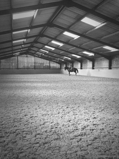 Ex race horse training.