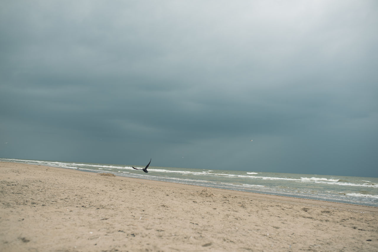 Summer days are over Beach Photography Bird Photography Cloudy Beach Beachphotography Bird Flying Ocean Outdoor Photography Outdoors Overcast Sand Sea Seagull Seaside Wings Wingspan Zandvoort