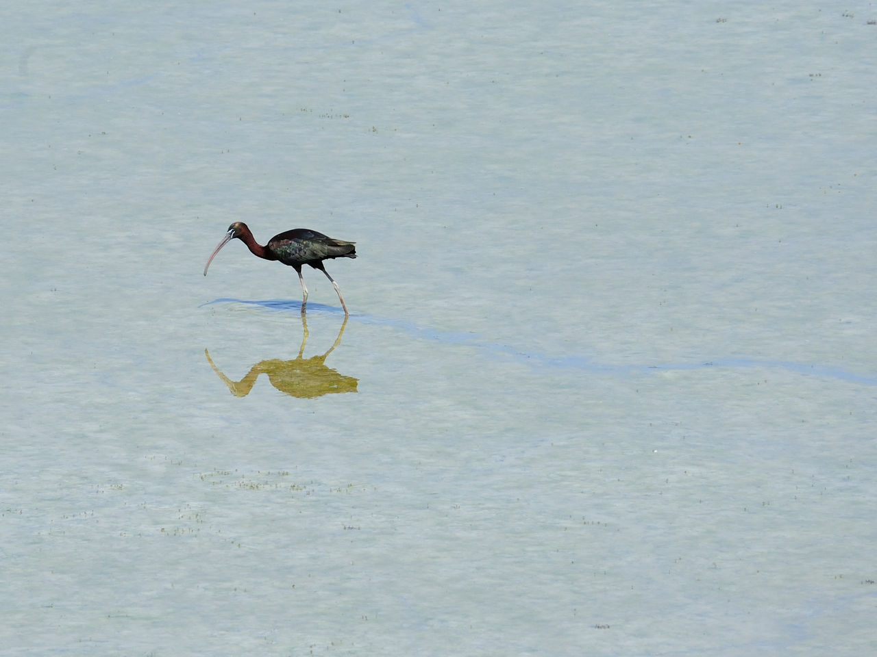water, bird, animals in the wild, one animal, animal wildlife, no people, nature, animal themes, day, outdoors