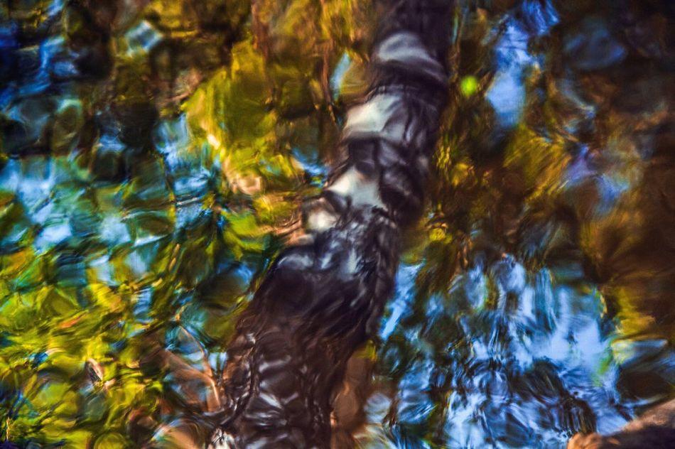 Abstract birch Birch Water Nature Reflection Photography Abstract Colors Paint Nature_collection Nature Photography Ekaterinburg_foto Ekaterinburg Ekaterinburgcity Ekb Ekbfoto Art Naturephotography вода отражение отражение в воде Природа фото краски  искусство береза