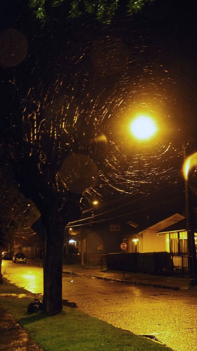 Awesome Branches Ilusión óptica Light Night Tree Walking Around The City  Winter