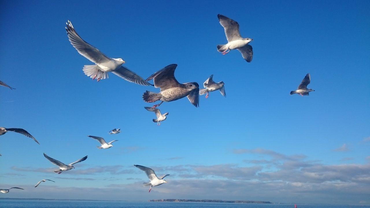 Birds in sky. Seagull