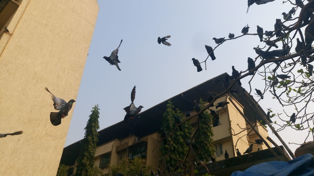 Low Angle View Of Birds And Building Against Clear Sky