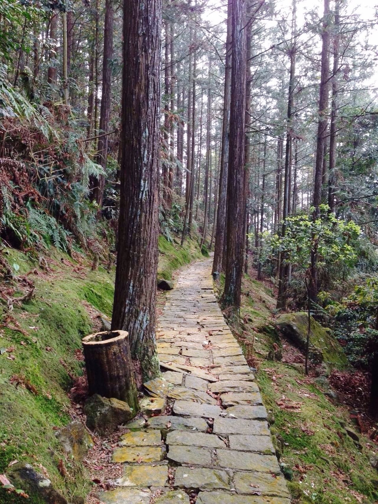 Good Moring Talking A Walk Forest Path Mountain Forest Path Walk In The Woods Where are you heading to ? Stone Path