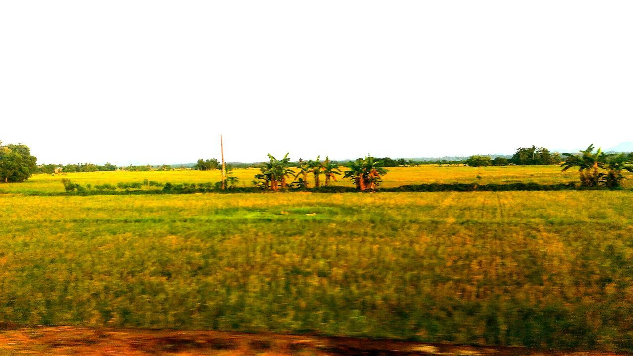 Agriculture Crop  Field Farm Growth Rural Scene Outdoors Day Nature No People Plant Flower Tree Sky Iloilophilippines Landscape Freshness Grass Rice Paddy Pilipinofarm Cloud - Sky Agriculture Field Growth Nature