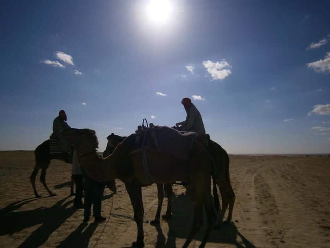 Horse Side View Sky Desert Domestic Animals Riding People Outdoors Motion Working Animal Animal Themes Sand Adults Only Adult Sun Mammal Nature Cowboy Hat Camel Light Desert Desert Beauty Cultures Tunisia Oriental