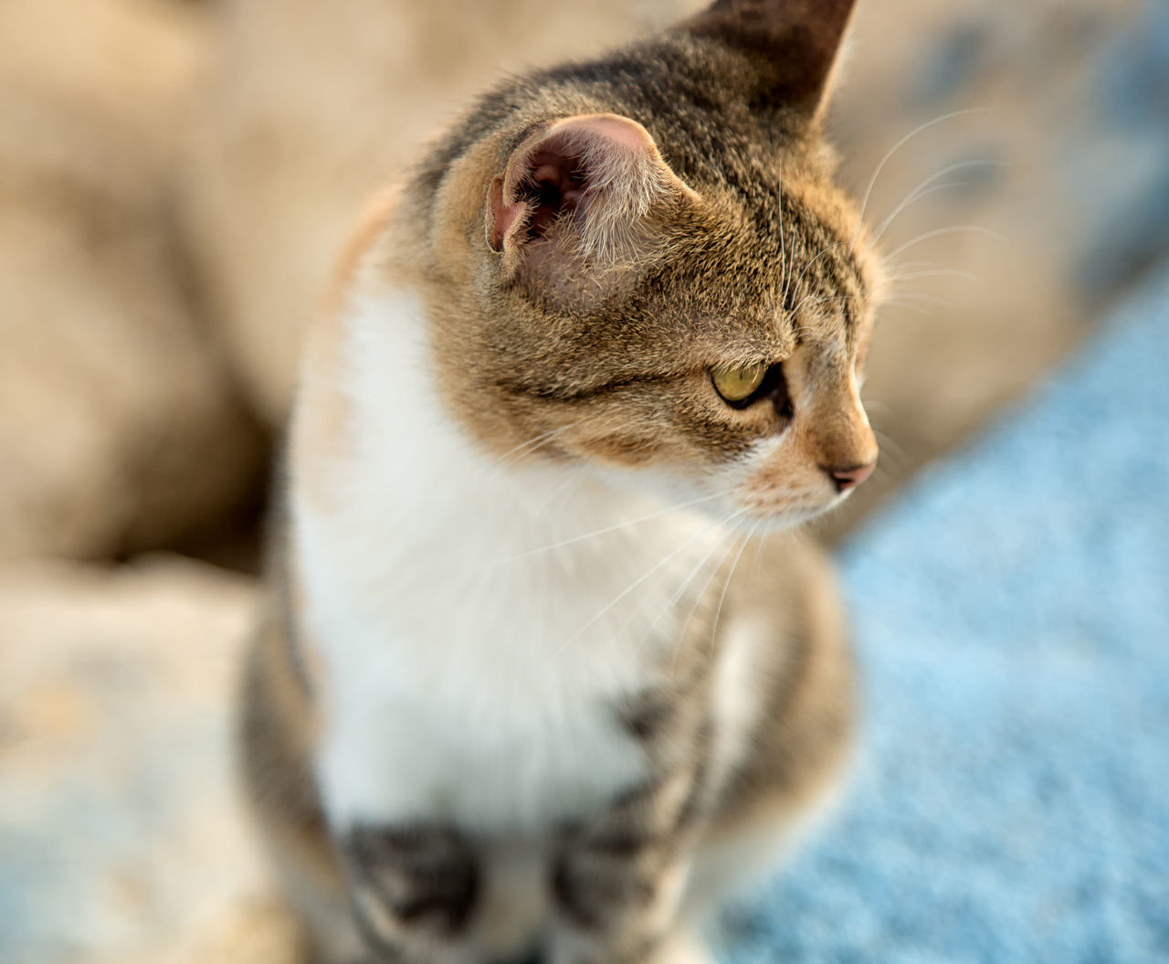 Street Cats Animal Themes Boulder Cats Close-up Coastline Day Domestic Animals Domestic Cat Feline Feline Portraits Mammal Mersin Turkey Nature No People One Animal Outdoors Pets Rock Formation Street Cats Yawning