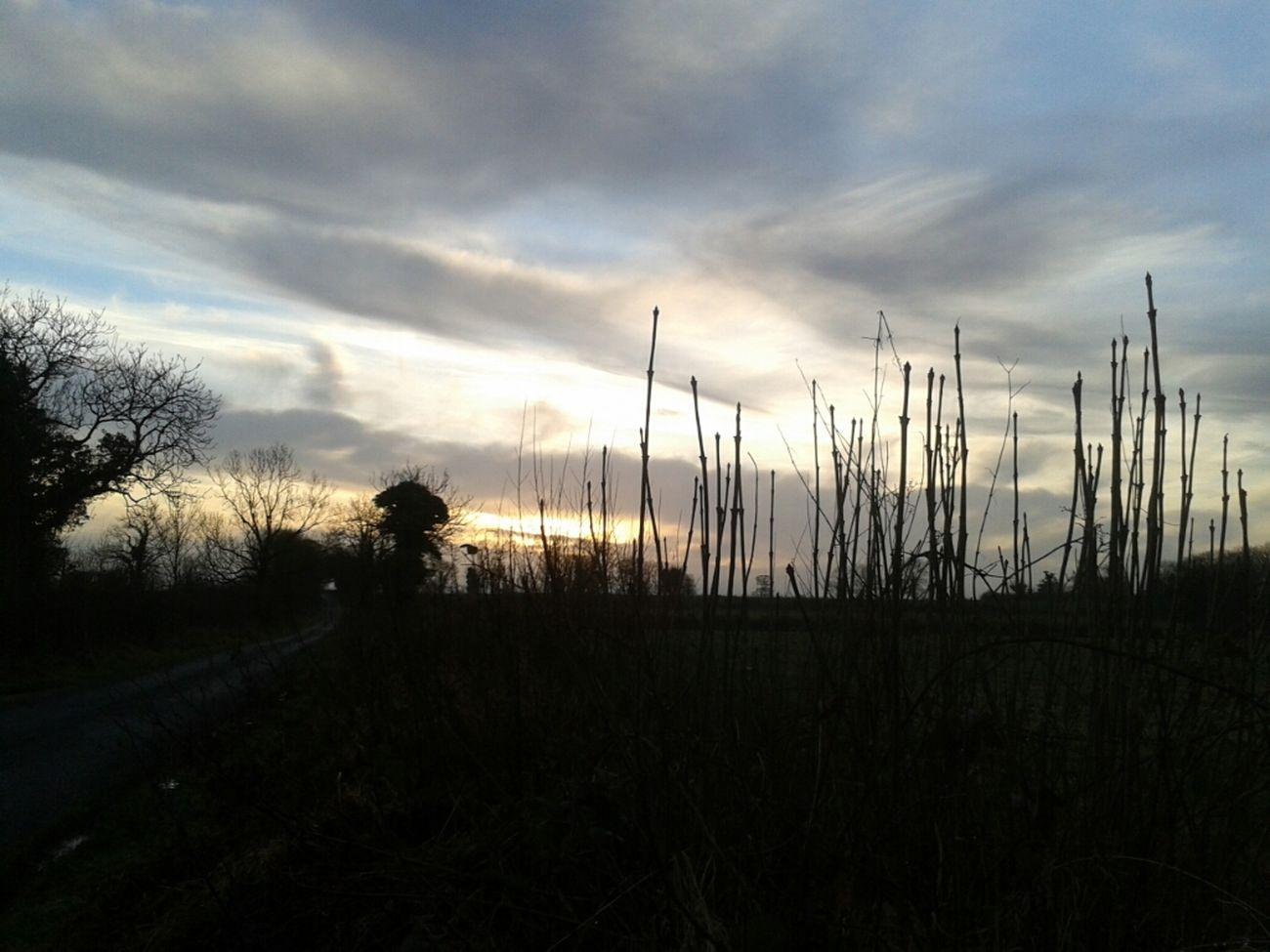 this evening's horizon #skies #horizom #amlp Horizon #amlp This Evening's Horizon Skies