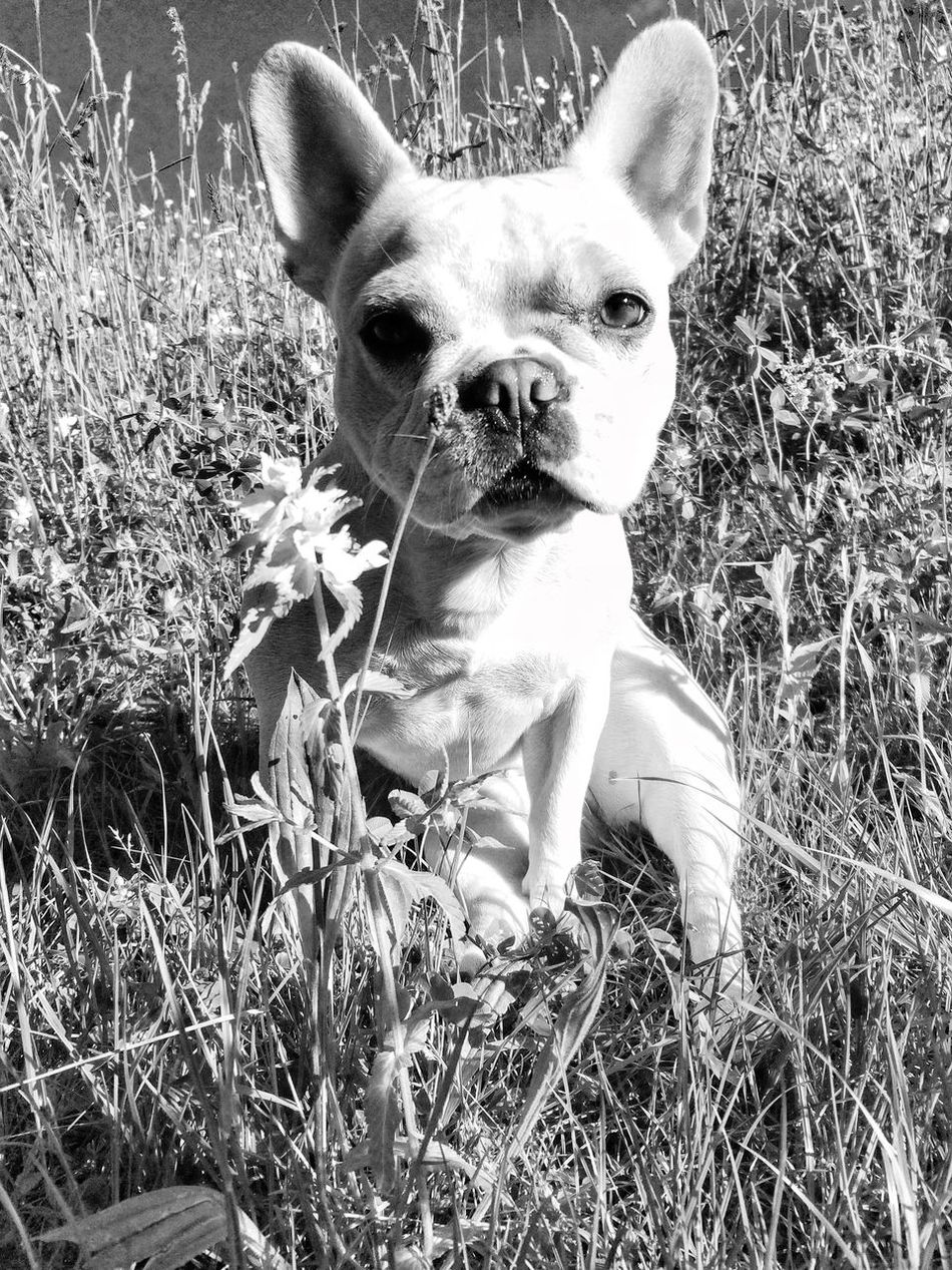 Blackandwhite Photography Chloe Mydog Chloe ❤
