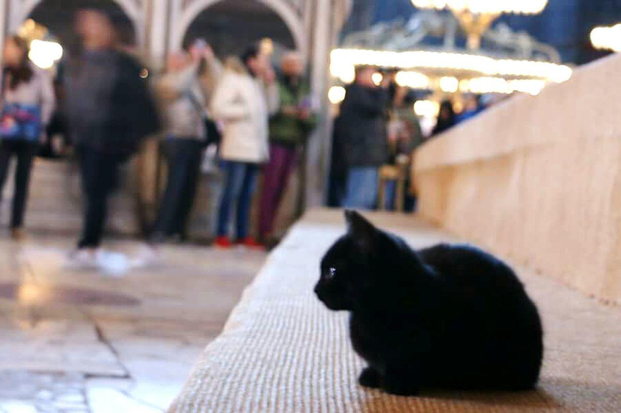 Taking Photos Agia Sofia Instanbul Temble Of Agia Sofia Monument Relaxing Cat♡ Hello World