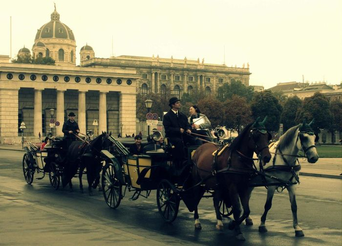 Horse City Horsedrawn Horse Cart Working Animal Old-fashioned Architecture Built Structure Building Exterior Men Horizontal People Outdoors Adult Day Vienna, Austria Viennacity Austria City Communication Travel Destinations The Drive