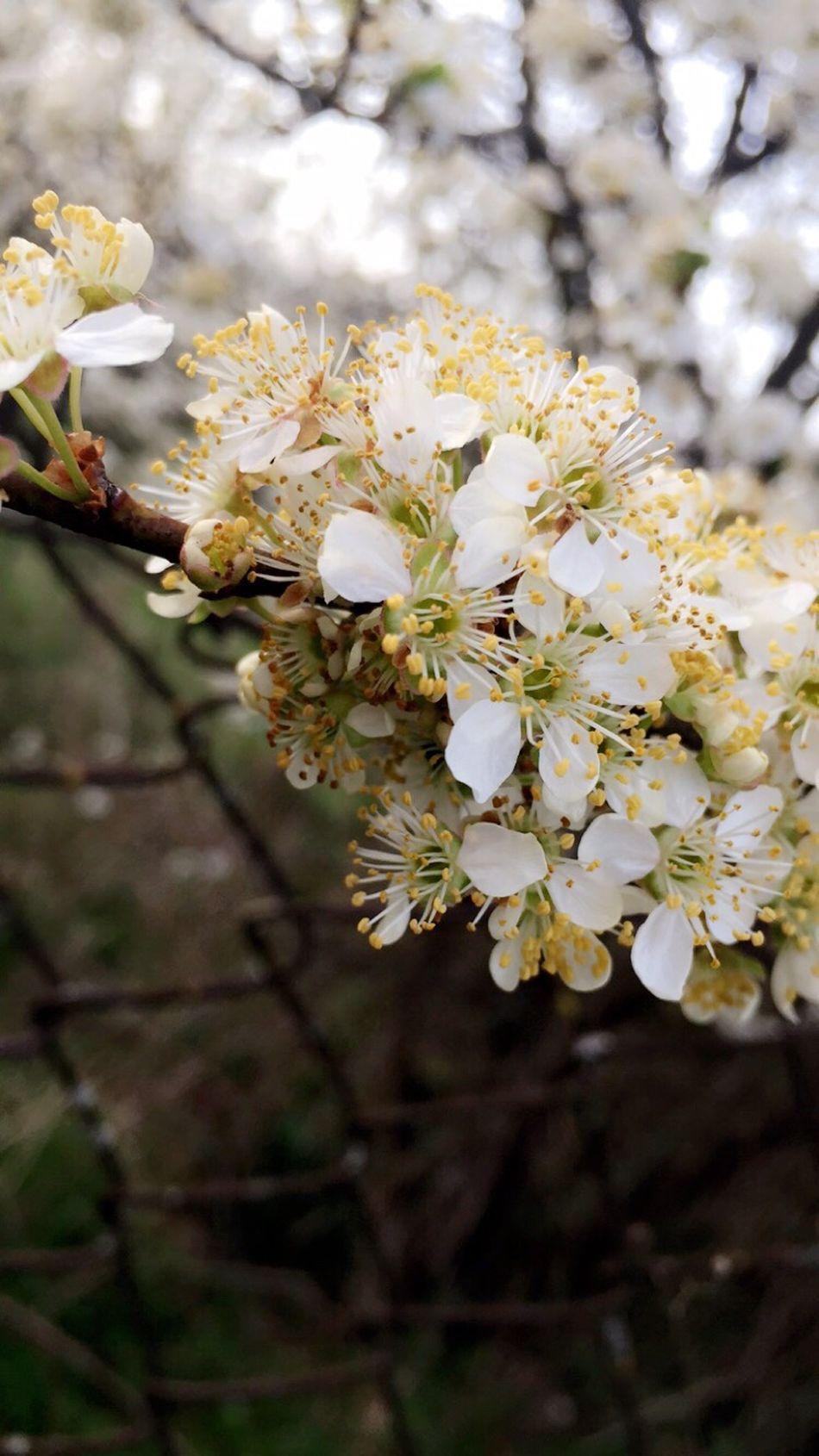 Adinafrasinphotography Spring Nature Photography Outdoors OpenEdit Sunflowers Spring Flowers Flowers