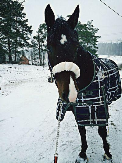 He is the best. Horse Winter Snow Best Friend