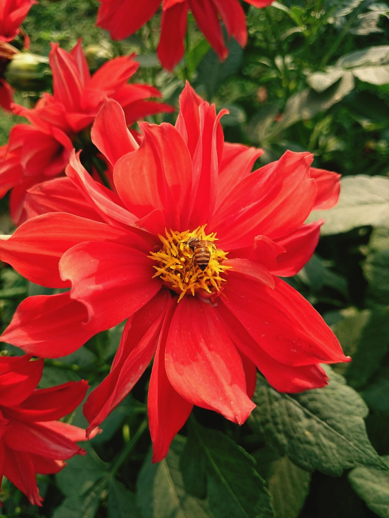 Working for Nectar.. First Eyeem Photo