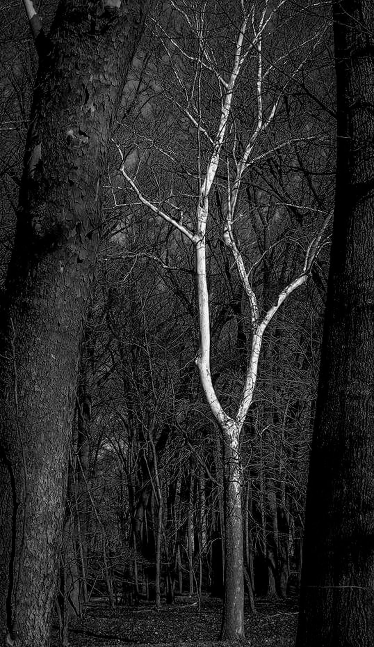 Darkness cannont drive out darkness; Only light can do that ! Woods Forrest Trees Tree Darkness And Light Dark Contrast EyeEm Best Shots - Black + White Opposites Alone Walk In The Forest Isolation Segregation  Black And White Black And White Photography Nature Sycamore EyeEm Nature Lover Eye4photography  Nature Photography Edits 1/28