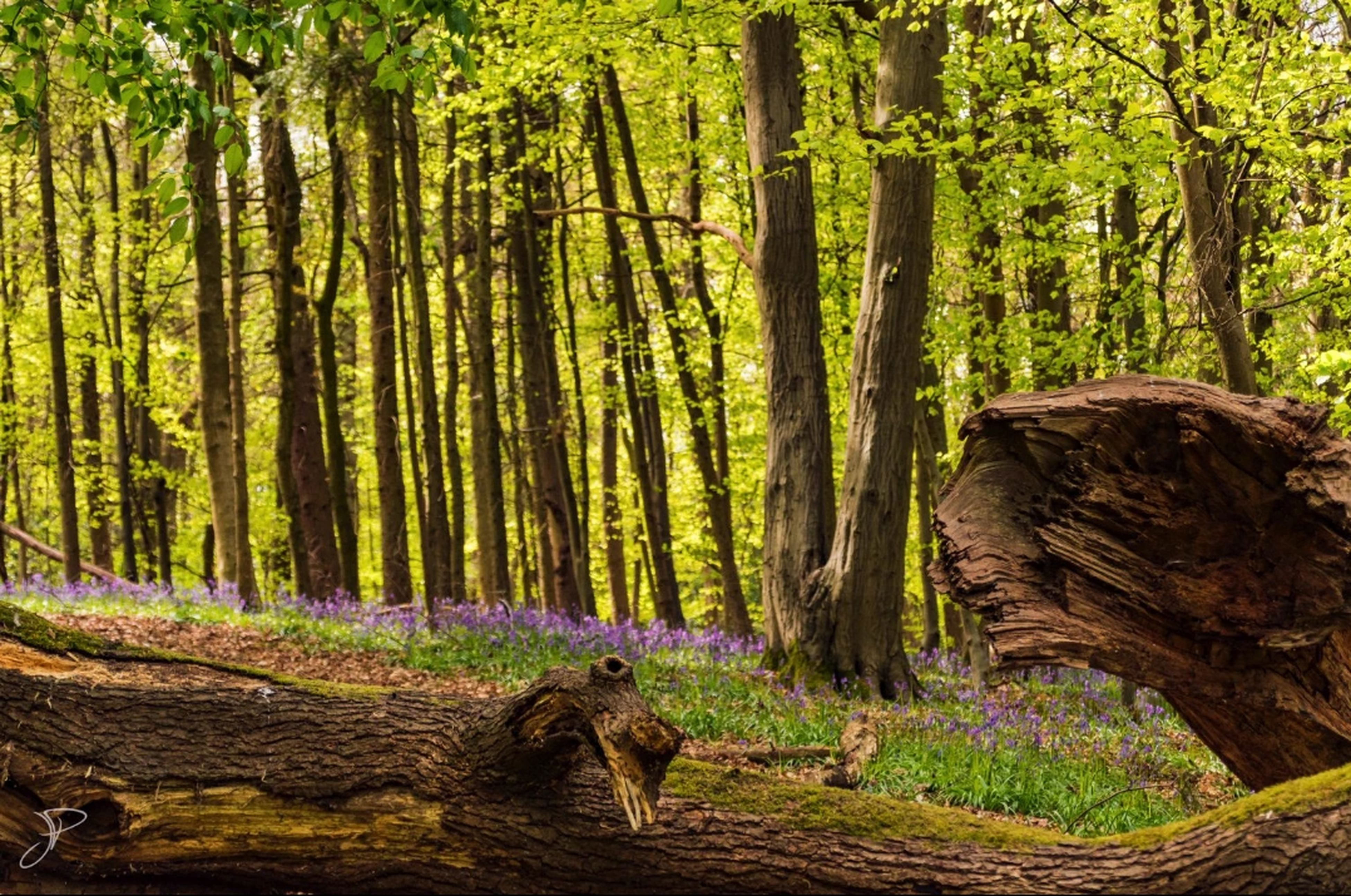 forest, tree, nature, sunlight, tree trunk, landscape, no people, animal, animal themes, outdoors, beauty in nature, mammal, domestic animals, animals in the wild, day