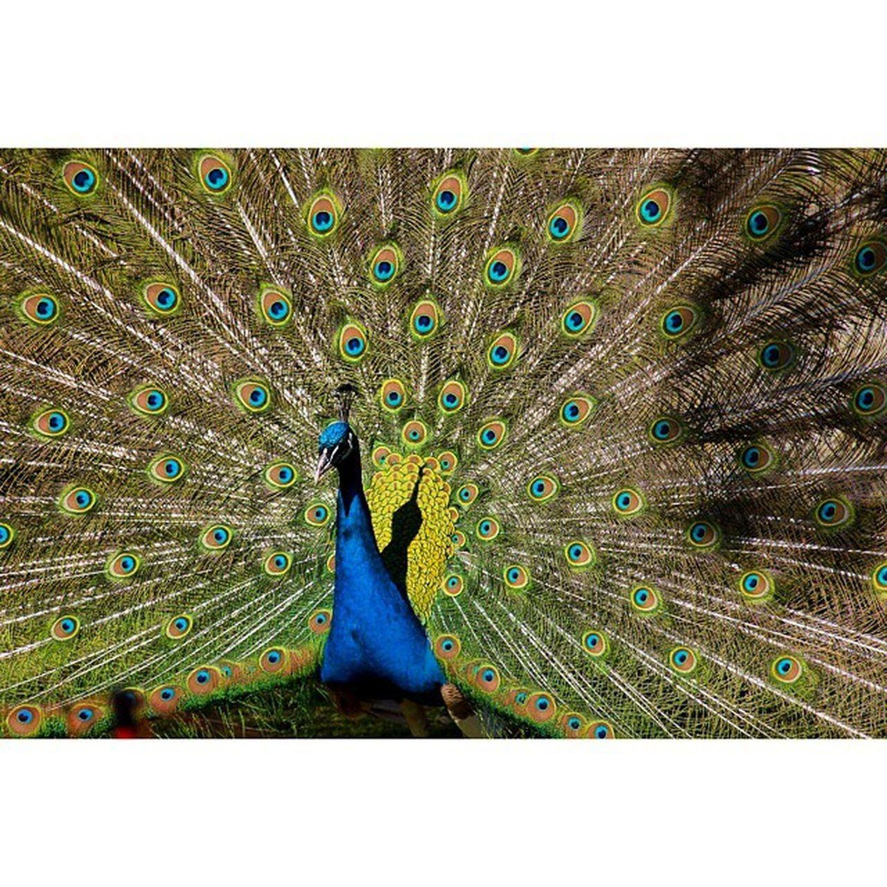 Beautiful male Fotofanatics_nature_ Nature_pd Nature_perfection Ig_nature Nature Naturelovers Tbie