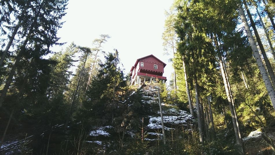 True Winter... Wanderlust Wandern Saxony Saxon Switzerland Red EyeEm Nature Lover Winter Nature