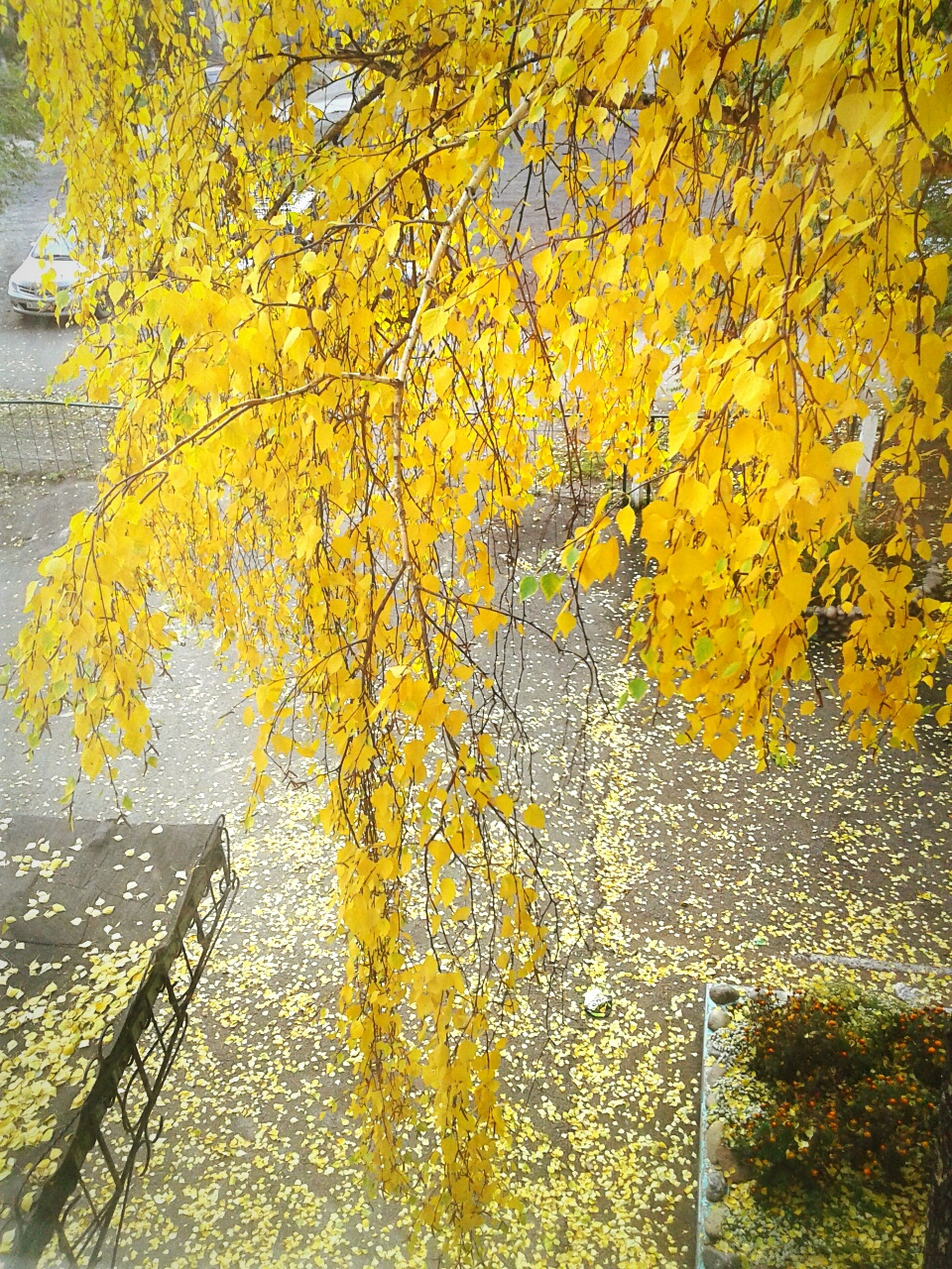 yellow, autumn, leaf, change, growth, tree, season, wall - building feature, built structure, branch, plant, day, outdoors, nature, no people, architecture, ivy, close-up, wall, metal