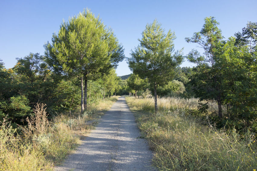 Bike Castellón Clear Sky Cycling Day Field Grass Green Color Greenway Growth Landscape Nature Nature No People Ojos Negros Outdoors Plant Road Scenics SPAIN The Way Forward Tree València Via Verde Way