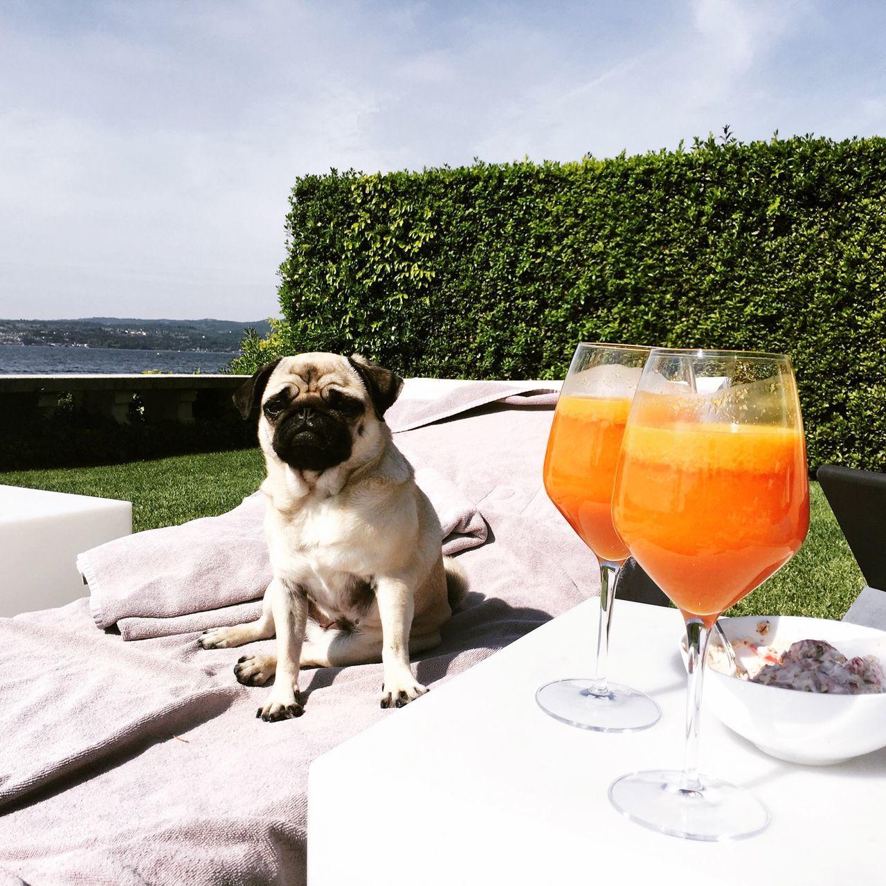 Louie the pug Relaxing Pooltime LakeGarda Lago Di Garda Italy