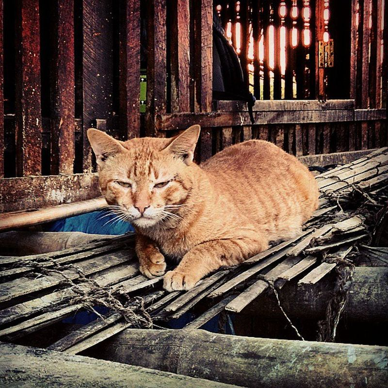 Seemsitlikescamera TheVillageCat Isolate Meme SouthEastAsia village