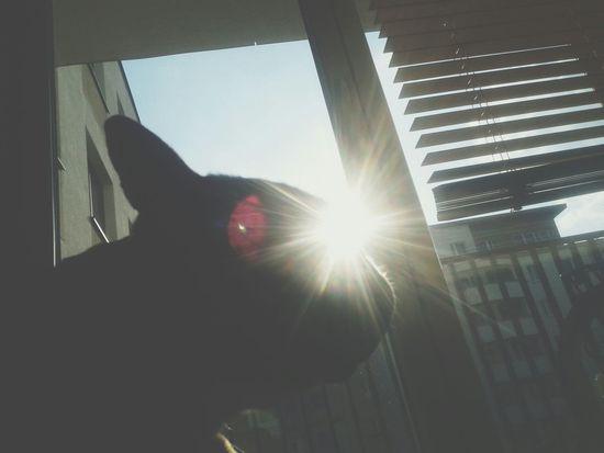 Dog Charlie Frenchbulldog Frenchie Sun Eye