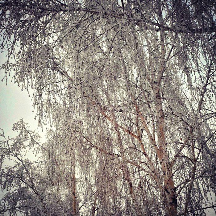 зима иней омск сибирь Морозисолнце мороз Winter Hoarfrost Frost Frostandsun Omsk Siberia