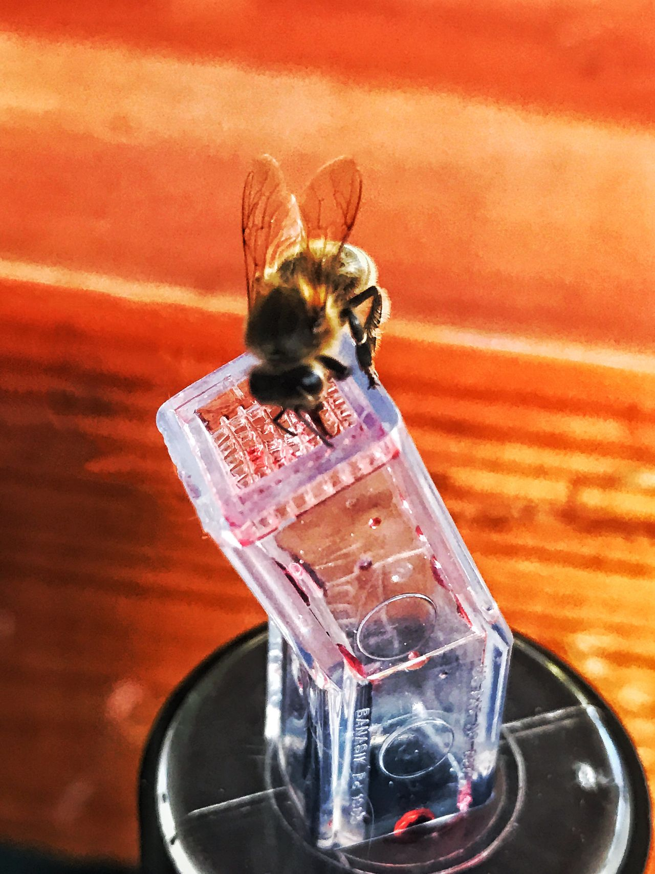 Bar Bee Close-up Life Is A Beach Photooftheday EyeEm Best Shots Enjoy The New Normal Photo Of The Day Getty Images