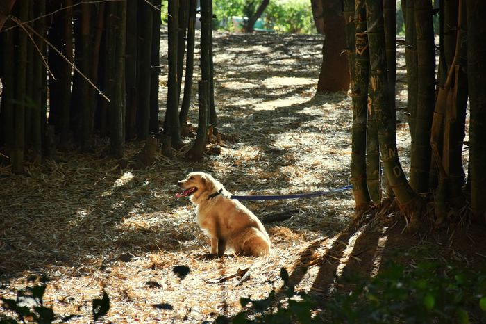 Tree Dog Pets Nature Animals In The Wild Outdoors Day Beauty In Nature Sunny Green Tree Trunk Morning Bangalore Bengaluru Park