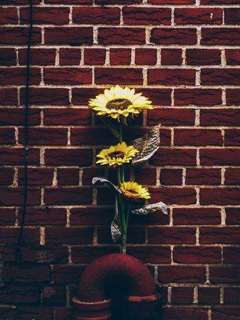 Random Flower Set Random RahimNoel Rahim Abstrax No People First Eyeem Photo Vivid Inspirational NY NYC New York Flower Beautiful Beauty In Nature