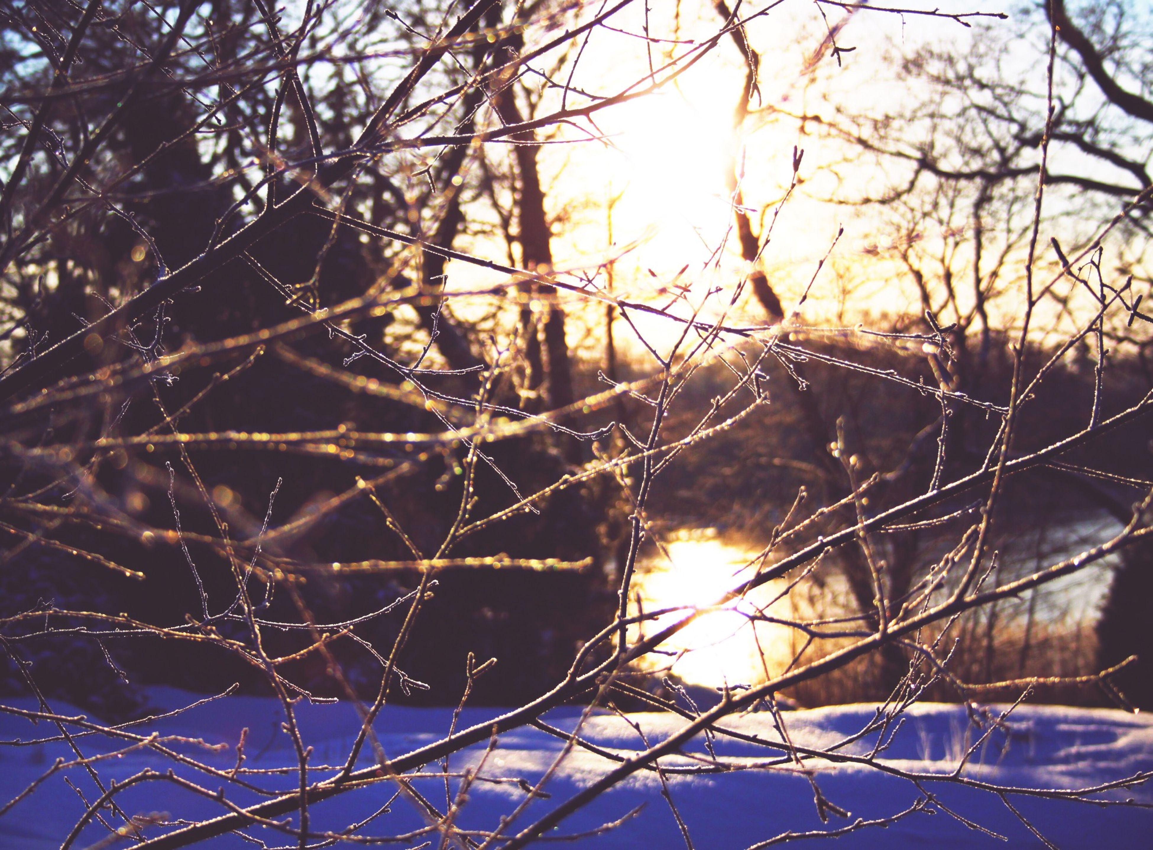 water, branch, tree, spider web, nature, bare tree, close-up, clear sky, reflection, focus on foreground, outdoors, sunlight, beauty in nature, sky, tranquility, day, season, no people, winter, sun