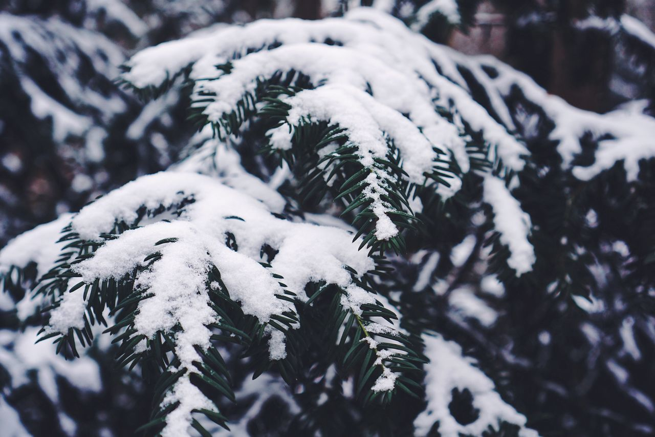 Winter Cold Temperature Snow Weather White Color Tree Nature Outdoors Beauty In Nature Close-up VSCO Real Photography Minimalism Winter Winter Wonderland White Green No People Nature_collection Nature