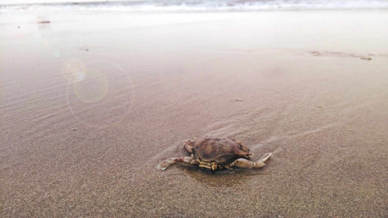 Beach One Animal Sand Animal Wildlife Sea Animals In The Wild Nature Sea Turtle Reptile Day Animal Themes Tortoise Sea Life Outdoors No People Beauty In Nature Water Tortoise Shell