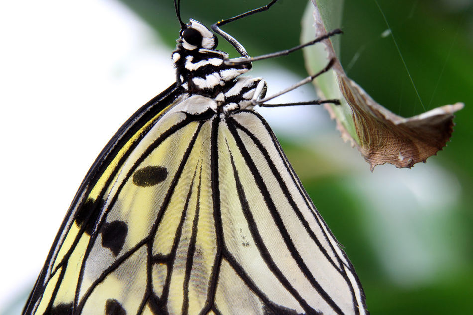 Butterfly Butterfly Insect Butterfly Macro Butterfly Makro Butterfly Wings Insect Insect Macrophotography Insect Photography
