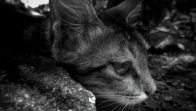 Monochrome Photography Blackandwhite Light And Shadow Close-up Pets Outdoors Cats Cat Lovers Cats Of EyeEm Cateyes Details Monochrome Professional