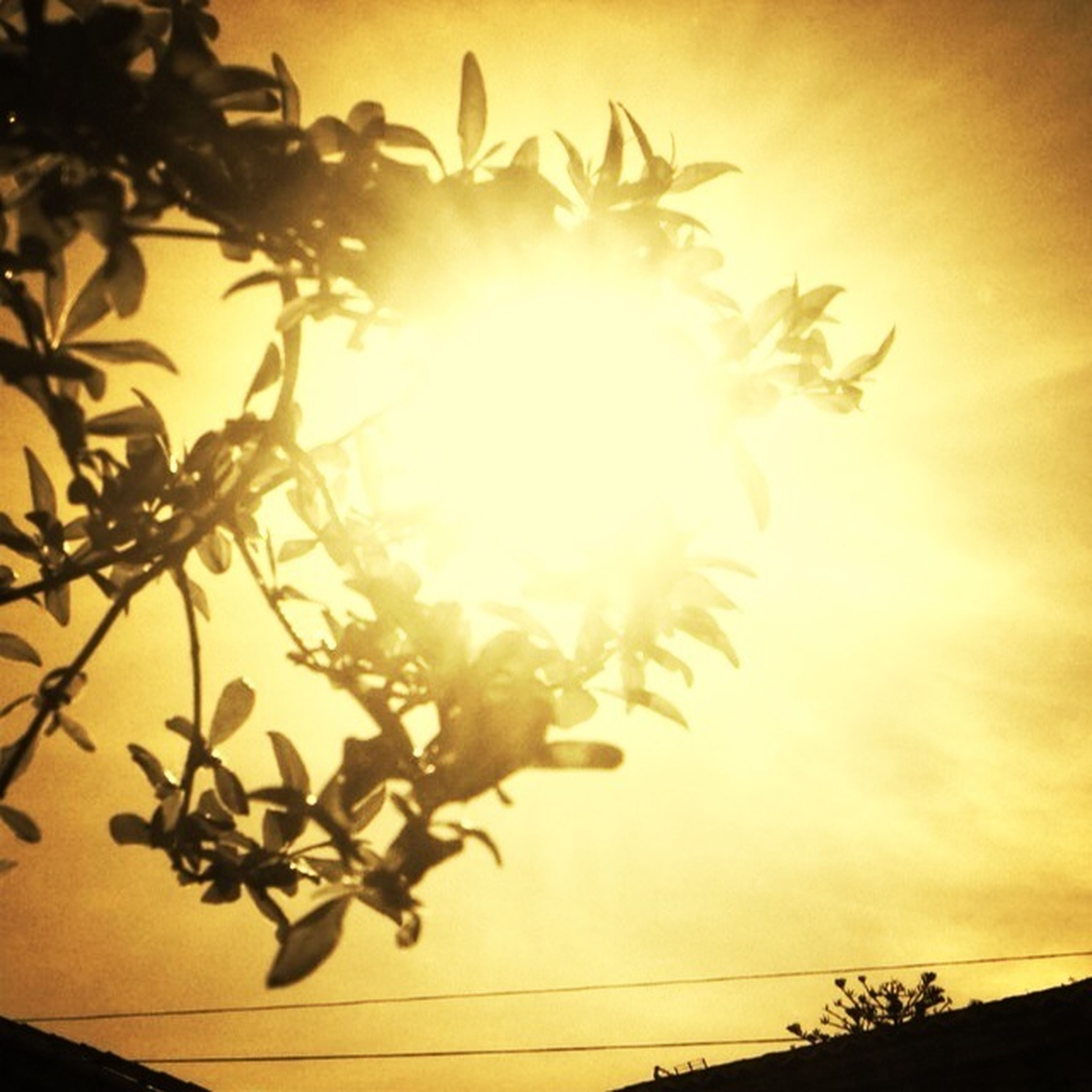 sun, sunlight, sunset, sunbeam, low angle view, sky, growth, lens flare, nature, leaf, beauty in nature, orange color, silhouette, plant, no people, tree, indoors, bright, tranquility