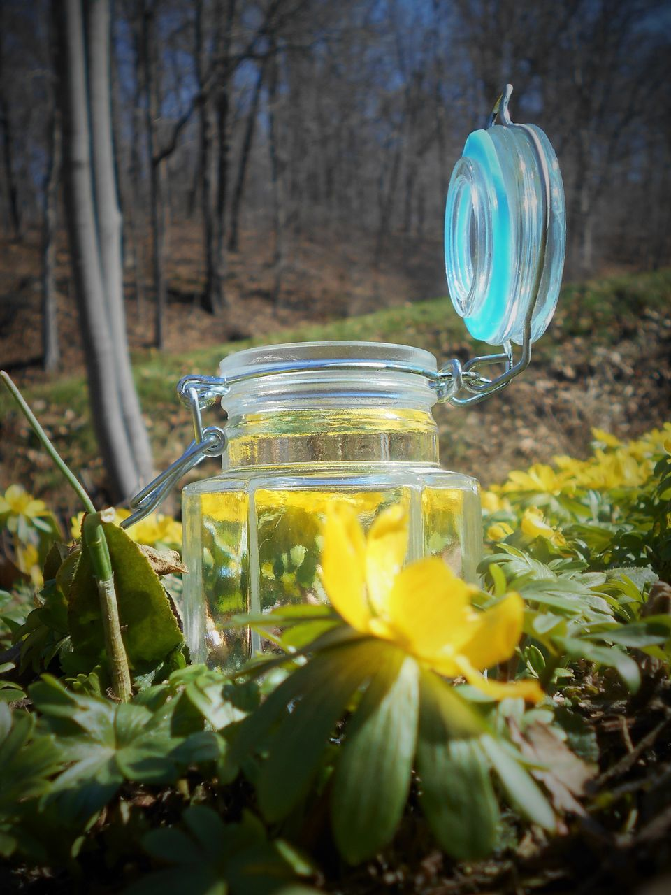 Jar Amidst Yellow Flowers Blooming On Field