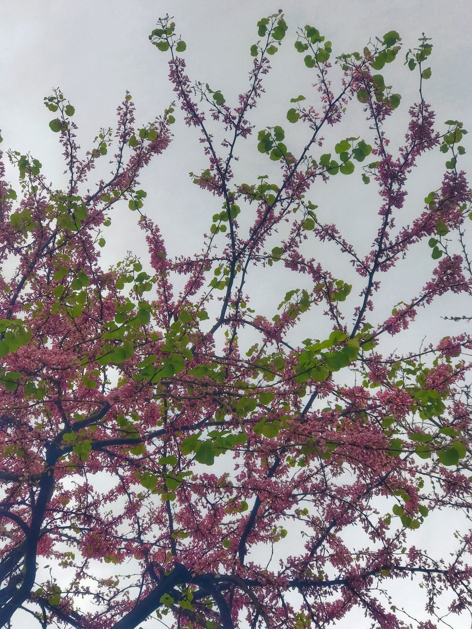 tree, growth, beauty in nature, no people, nature, branch, flower, low angle view, blossom, springtime, freshness, day, outdoors, fragility, backgrounds, full frame, scenics, sky, close-up