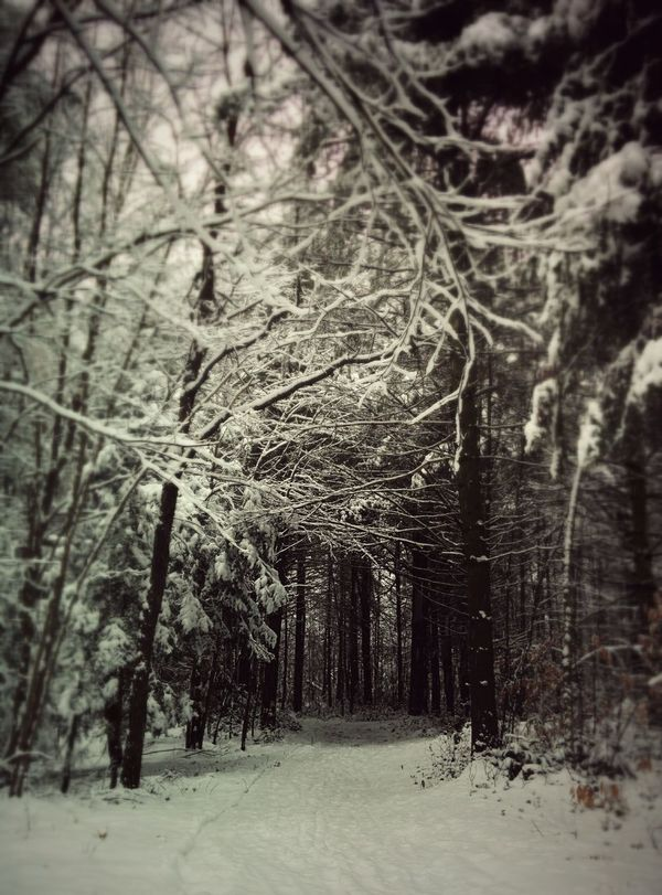 Winterscapes The Dark Forest Forest Path Snow Day