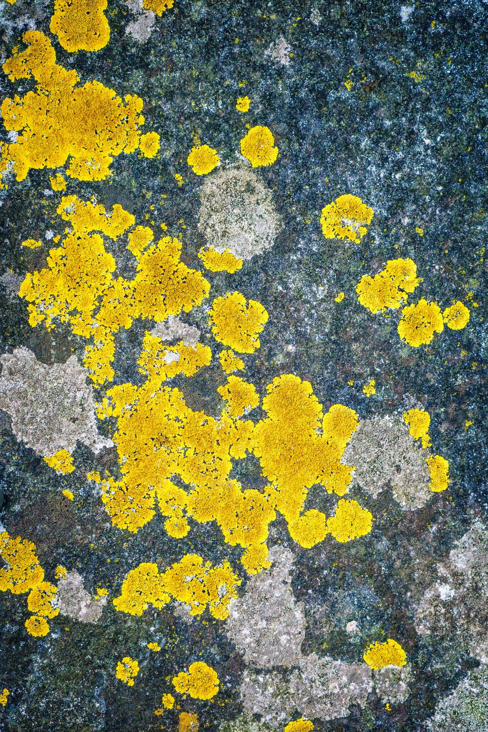 Abstract Abstract Nature Abstract Photography Asphalt Close-up Day High Angle View Moss Moss & Lichen No People Outdoors Pattern Patterns & Textures Patterns In Nature Road Textured  Yellow