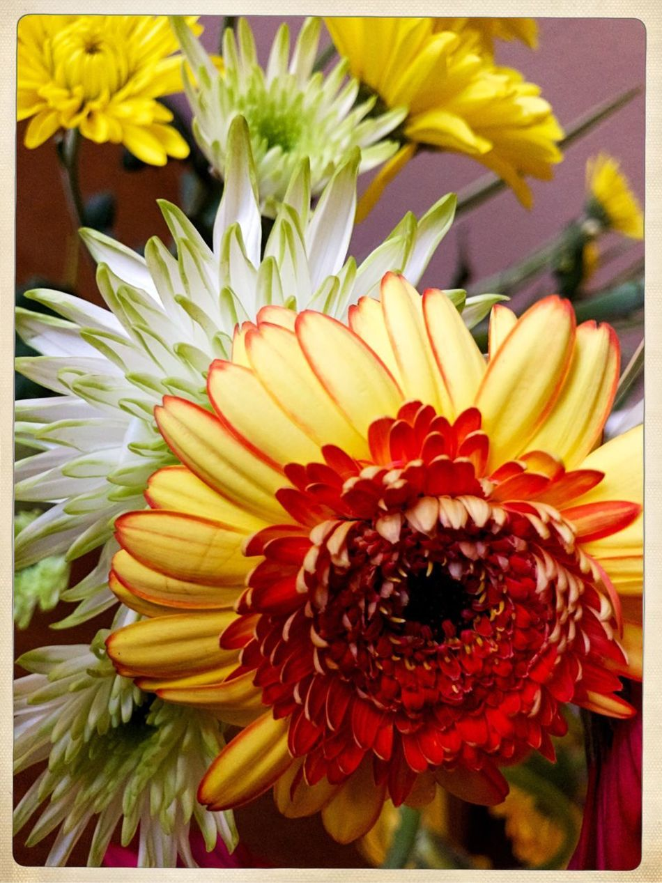 Flower Fragility Petal Freshness Flower Head Beauty In Nature Nature Yellow No People Close-up Day Growth Blooming Outdoors Bouquet