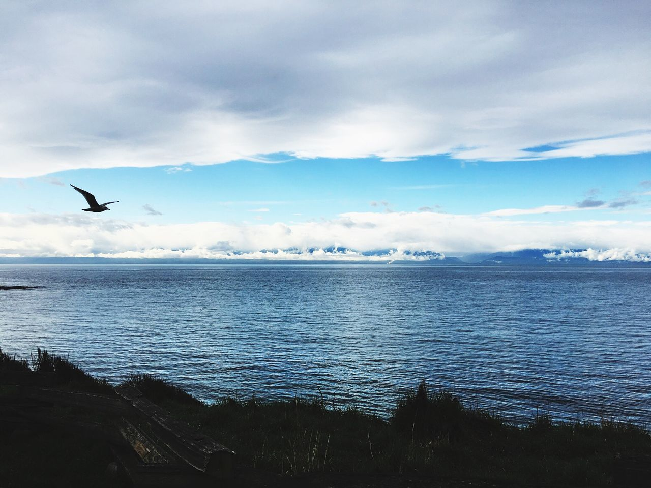 bird, animal themes, one animal, flying, animals in the wild, water, sea, nature, beauty in nature, animal wildlife, sky, tranquil scene, scenics, cloud - sky, wildlife, spread wings, mid-air, tranquility, no people, outdoors, day, seagull, horizon over water, sea bird