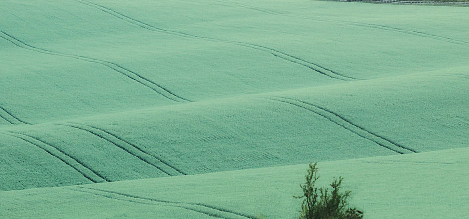 Agriculture Backgrounds Carpet Close-up Contemplate Country Crops Day Escape Europe Farming Flax Full Frame Gentle Green Color Harvest Lines Nature Outdoors Pattern Planting Seedlings Soft Undulating Waves Wiltshire UK