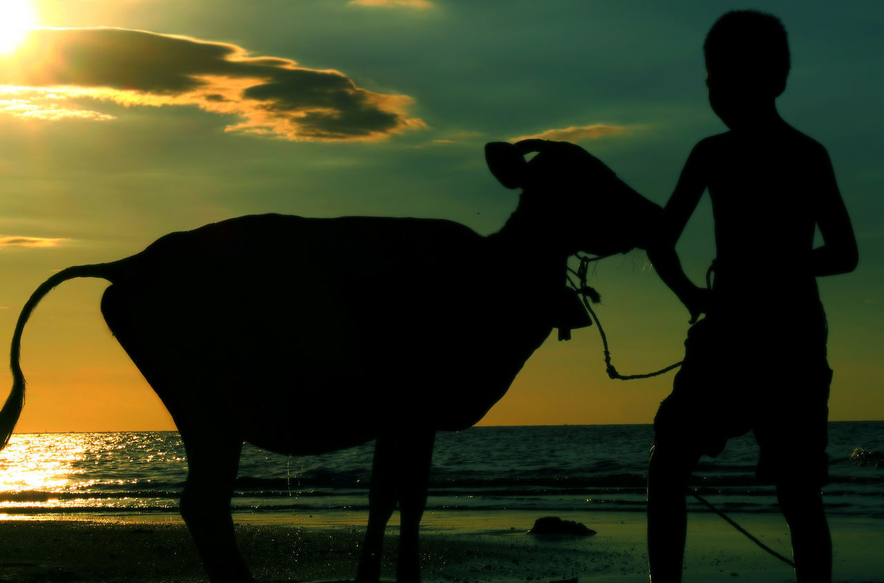 silhouette, sunset, animal themes, one animal, two people, domestic animals, sky, childhood, mammal, full length, nature, sea, outdoors, boys, water, child, real people, lifestyles, standing, horizon over water, children only, beauty in nature, day, people