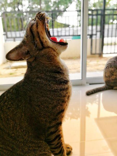 Cat Cat Thailand :) EyeEm Selects Window Looking Through Window One Animal Day Animal Themes Mammal Pets