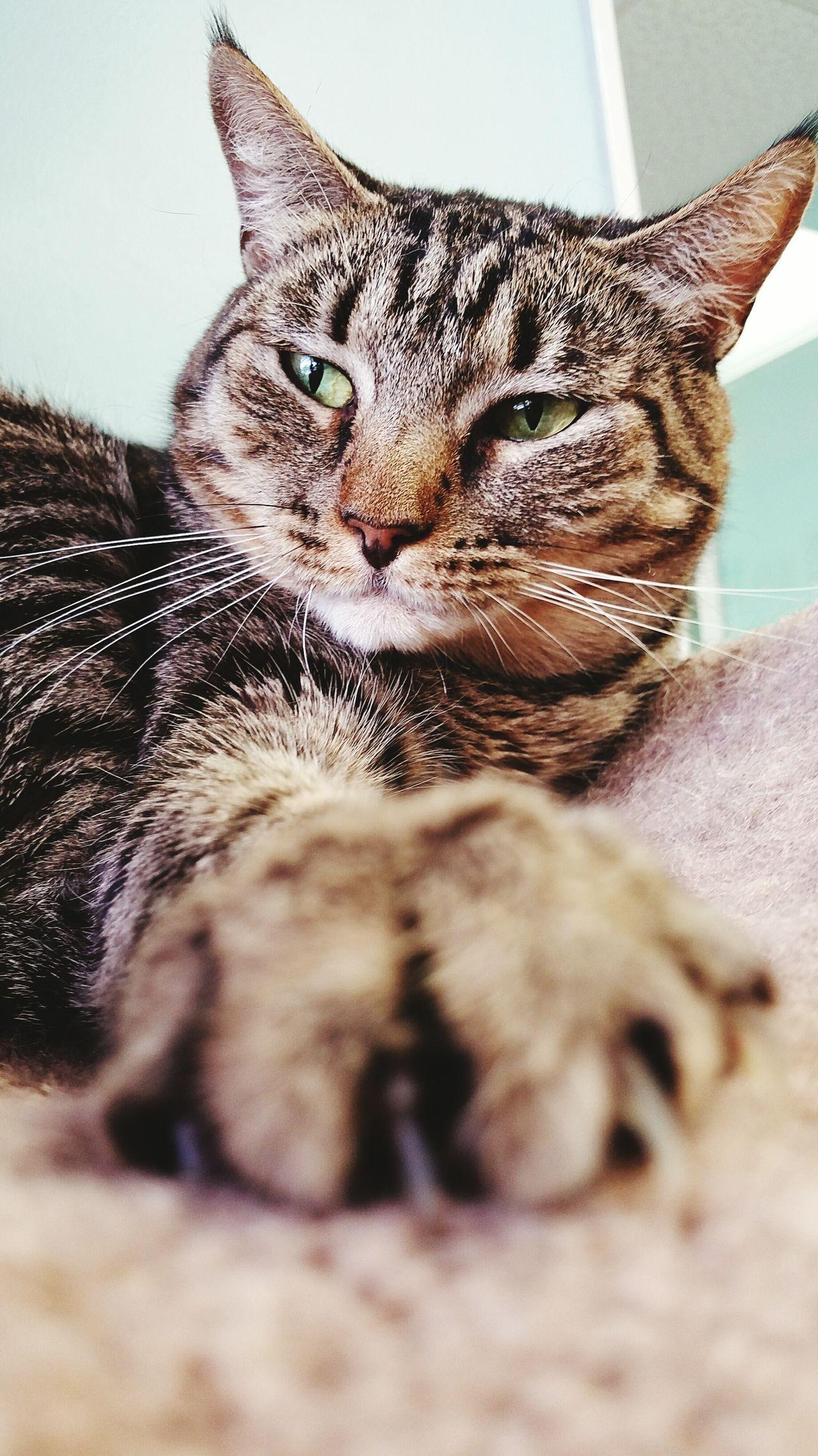 Relaxing Cat Pet Cute Pets Feline Furkids Atlanta Ga
