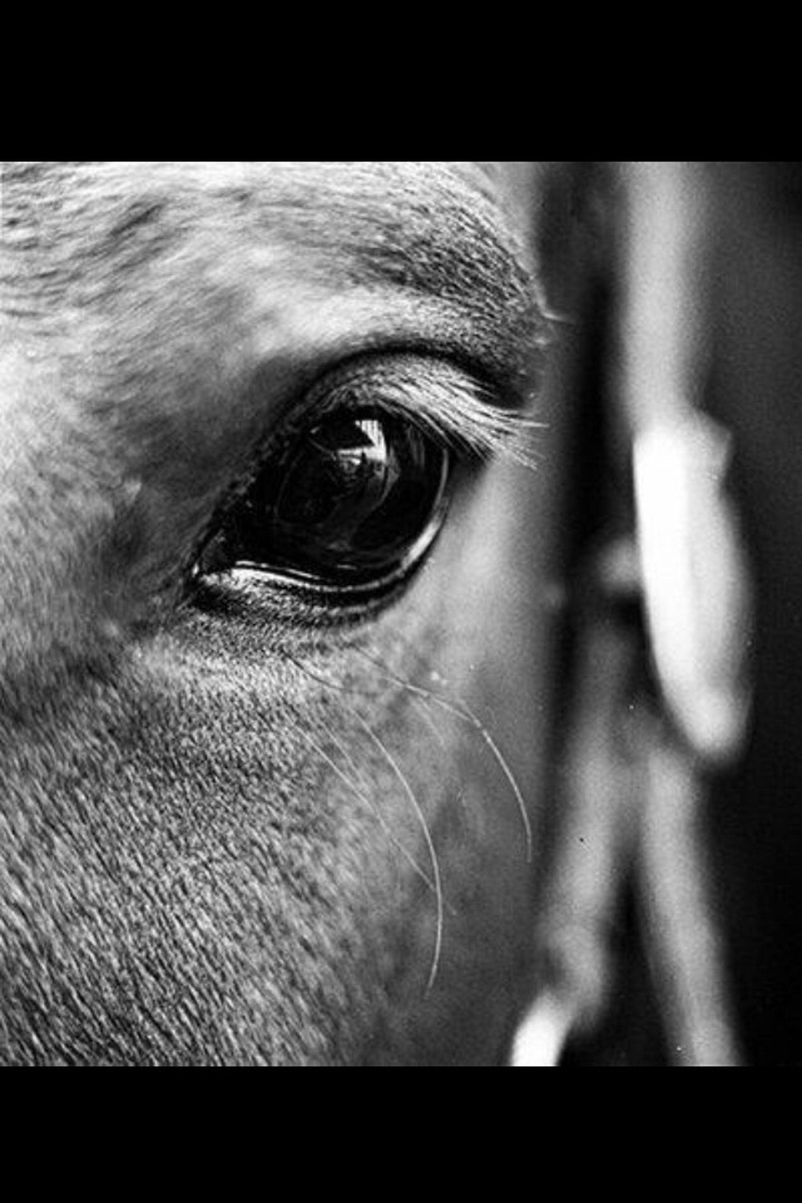 close-up, one animal, part of, animal themes, animal body part, animal head, transfer print, animal eye, auto post production filter, indoors, detail, extreme close up, selective focus, focus on foreground, human eye, extreme close-up, front view