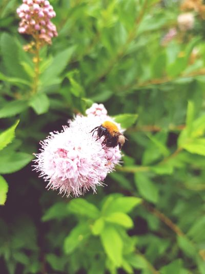 Flower Plant Insect One Animal Close-up Nature Focus On Foreground Fragility Animal Wildlife Leaf No People Green Color Day Animals In The Wild Outdoors Animal Themes Flower Head Beauty In Nature Freshness Thistle